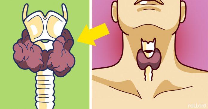 ?Es la gl?ndula tiroides la culpable de tu obesidad? por Nutricienta