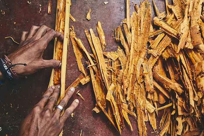 como cultivar canela